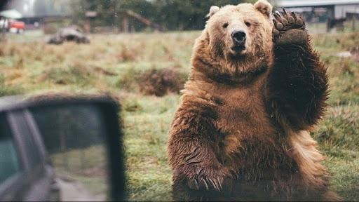 Najlepší medveď