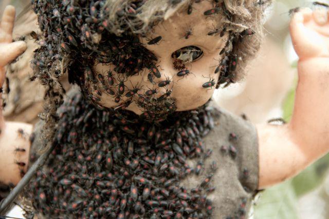 Telo bábiky domovom hmyzu